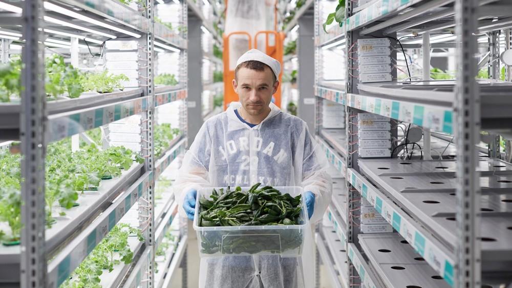 iFarm агротех-компания и COVID19